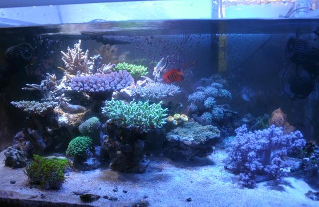 サンゴ水槽の様子7月