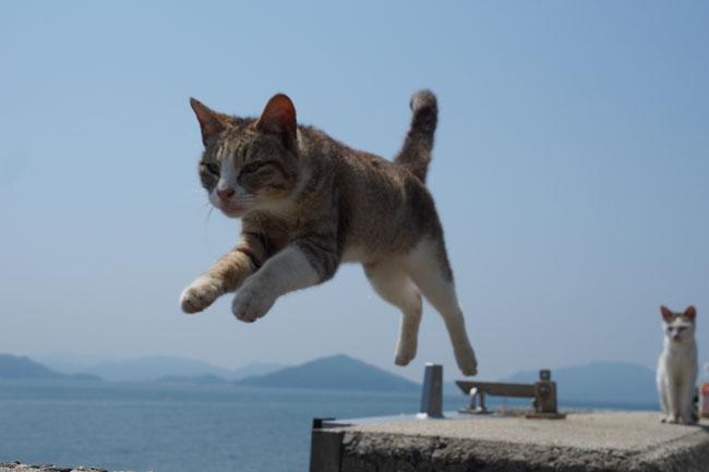 佐栁島の飛びねこ