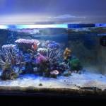サンゴ水槽レイアウト変更