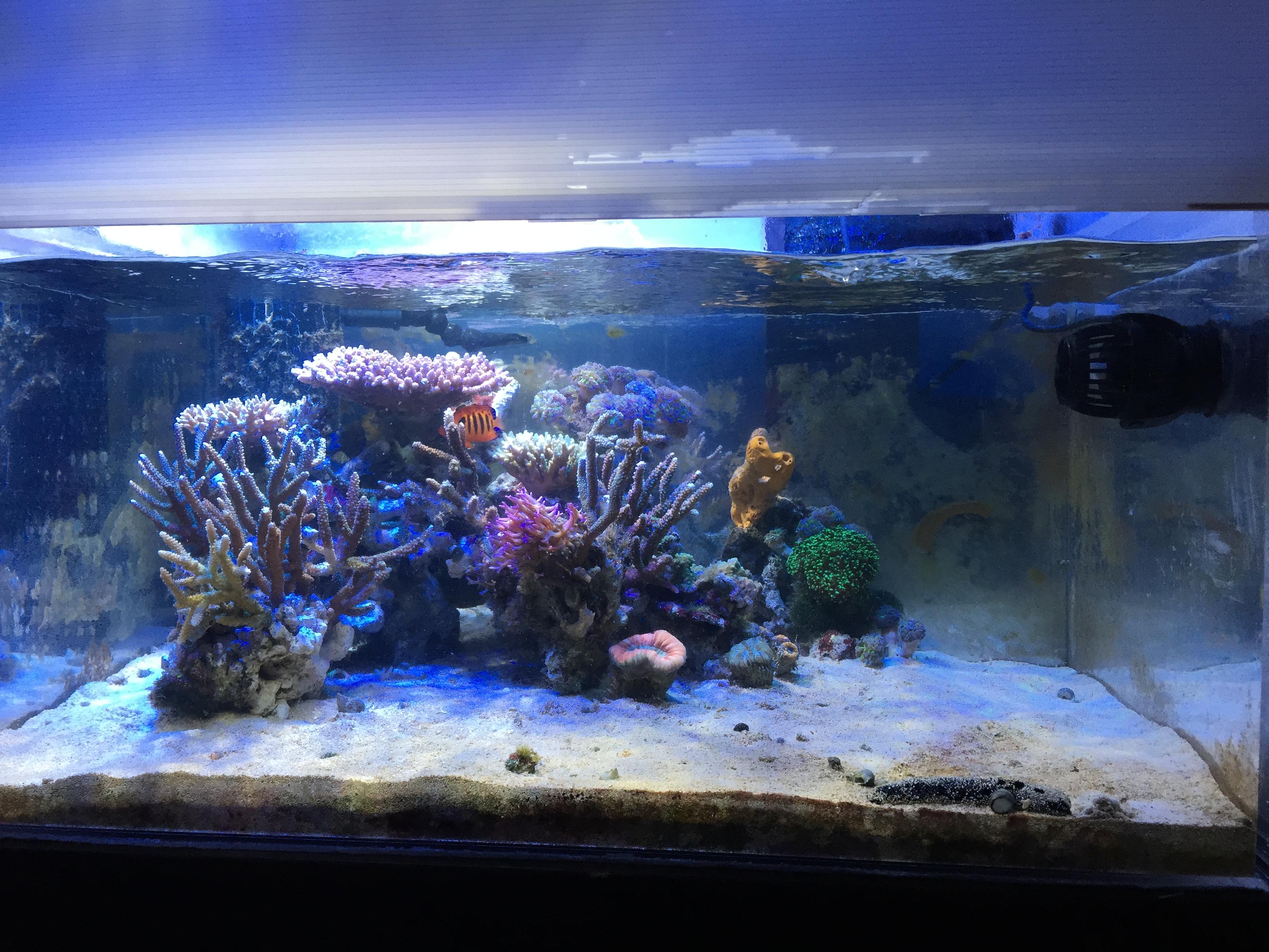 サンゴ水槽レイアウト