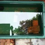 庭に亀の池を作ろう(その2)
