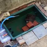 庭に池を作ろう(その3、完成)