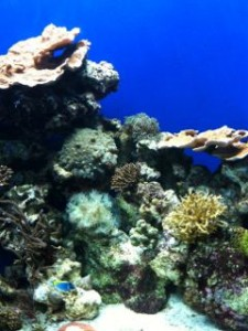京都水族館サンゴ水槽