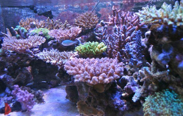 サンゴ水槽ビフォー