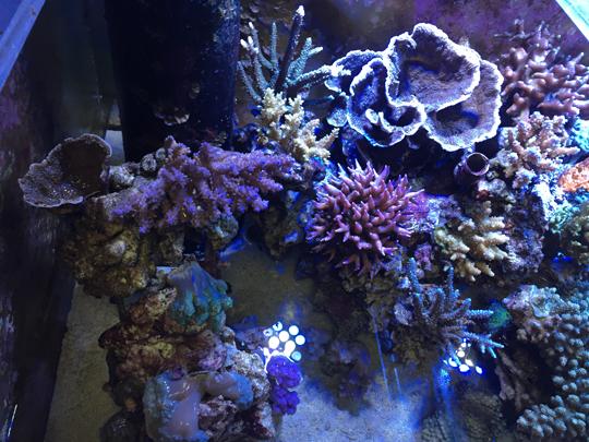 水換えで露出するサンゴ