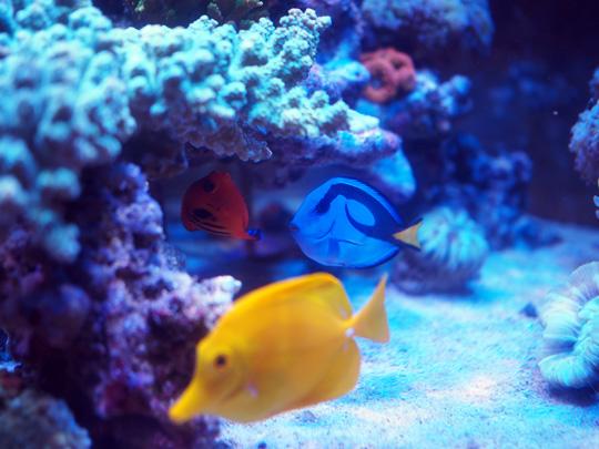 海水魚信号部隊