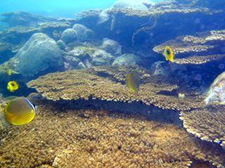 オレンジハウス前の珊瑚礁
